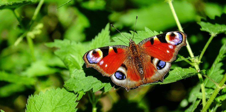 citation papillon